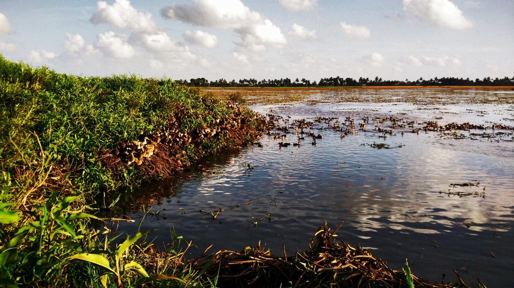 Ducking in Kerala