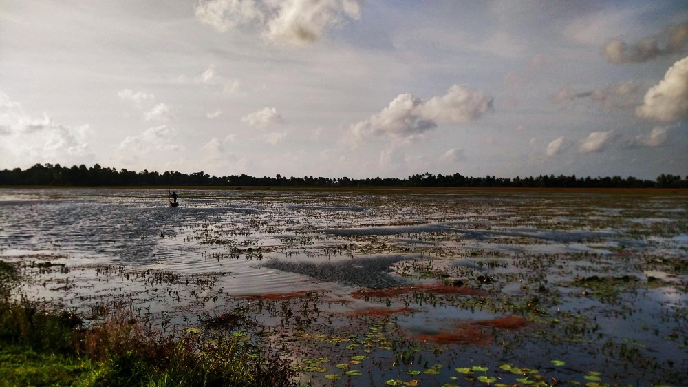 Floating on Paddy fields Kerala