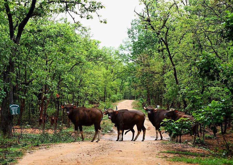Barnawapara-Wildlife-Sanctuary.jpg