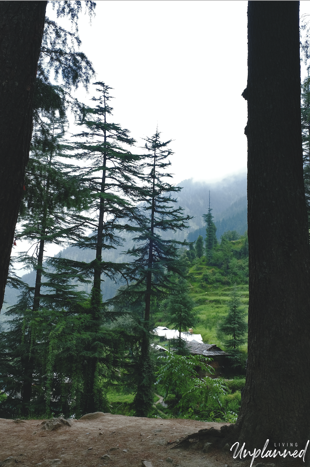My Manali from forest